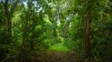 Ibadanský les hrůzy: Vraždy ve jménu černé magie vyděsily i otrlé kriminalisty