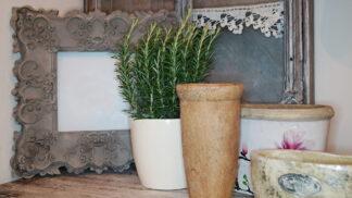 Pěstování bylinek za oknem: Tyhle druhy vám na parapetu vyčarují krásu i skvěle poslouží