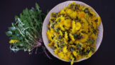 Mladé listy pampelišky: Skvělá a zdravá alternativa nejen do salátu, když chcete ušetřit za rukolu