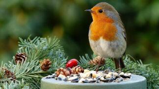 Cvrlikající krása za oknem: Kteří ptáci začínají ráno zpívat jako první?