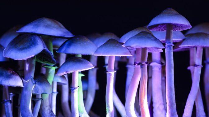 22 dnů boje o život: Muži s bipolární poruchourostlyv žilách magické houbičky