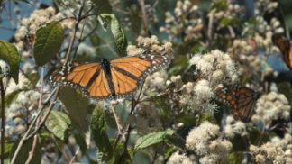 Dokument Divoká roční období: 10 největších zajímavostí, které se právě dějí v přírodě