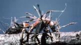 Housenice čínská: Hororový mutant houby a hmyzu léčí astma, alergie a plodnost