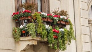 7 květin pro krásný balkon: Tyhle rostliny potěší záplavou barev i v náročných podmínkách