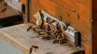 Zvířata v Černobylu: Žížaly se po výbuchu zavrtaly metr pod zem, včely zůstaly raději v úlu
