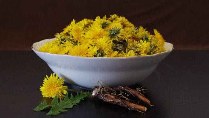 Pampeliškový med: Žlutý zázrak pomáhá nejen proti virózám. Pozor na chyby při výrobě