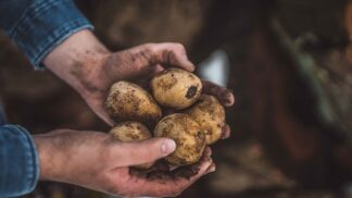 Roste zájem o původ potravin. Proč je dobré ho znát?