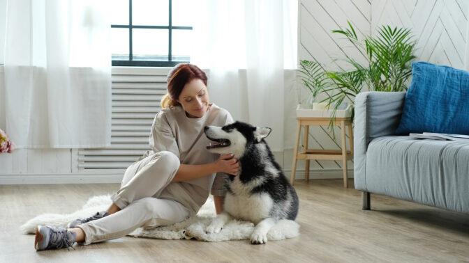Pořizujete si do bytu psa? Tohle byste rozhodně neměli podcenit