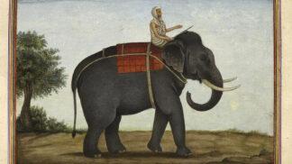 Slavná cirkusová slonice Mary: Umírala v nepředstavitelných bolestech, ze způsobu její smrti tuhne krev v žilách