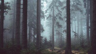 Tajemný les Pánova Březina: Má tragickou minulost, zvířata se ho prý bojí jako čert kříže