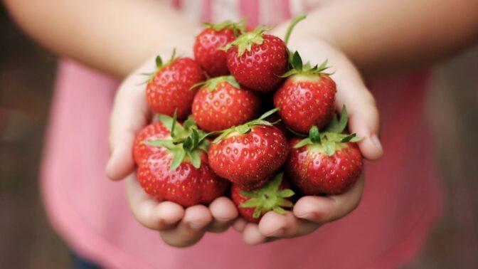 Sezona jahod je tady: Obsahují spoustu vitamínů, minerálů, působí proti rakovině a báječně chutnají