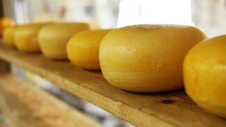 Velká sýrová vzpoura: Bizarní válku britských sedláků ukončila v roce 1766 až armáda