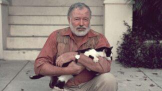 TOP 3 místa, kde lidé slouží kočkám: Jedno z nich nabízí neobvyklou památku na Ernesta Hemingwaye