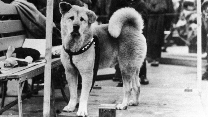 Statečný Hačikó: Dojemný příběh nejvěrnějšího psa na světě