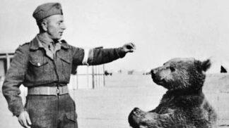 Medvědí desátník Wojtek: Mazel, který miloval zápasy, tulení a pivo
