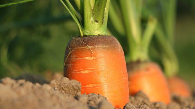 Připravte se na dary léta aneb Jak rychle spotřebovat hromady čerstvé zeleniny