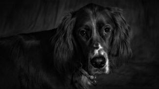 Mluvící pes Don: Podivuhodný příběh mazlíčka, který prý uměl požádat o moučník