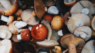 Už rostou houby: Báječné jsou pečené s bylinkami, ale neztratí se ani v buřtguláši