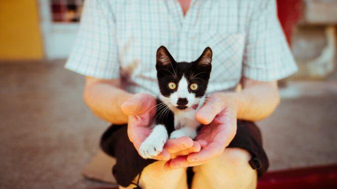 Jitka (61): Dostala jsem od sousedky k narozeninám kočičku, která není tak docela obyčejná