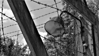 Zrůdný nacistický experiment: Jak vypadalo mučení mořskou vodou v koncentračním táboře Dachau?