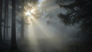 Upír z Cape Cod: Tony Costa ukrýval kusy těl na lesní zahrádce s marihuanou