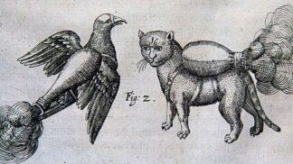 Kruté zbraně minulosti: Na nepřítele se posílaly zapálené kočky, lišky nebo ptáci
