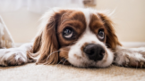 Thumbnail # 5 důvodů, proč je pes oprávněně nejlepší přítel člověka. Věděli jste, že vám dokáže prodloužit život?