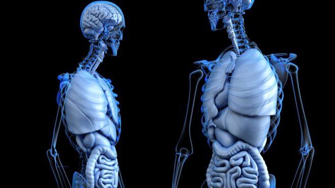 8 zbytečností, které máte v těle, ale absolutně je nepotřebujete