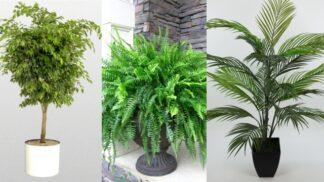 Vstáváte unavení? Možná vám v ložnici chybí zeleň. Těchto 5 čisticích rostlin zlepšuje kvalitu spánku