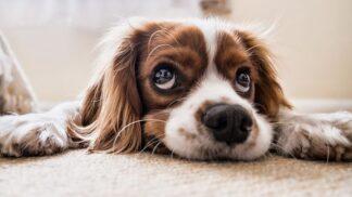 Jak odnaučit svého psa loudit? Jedině důsledností