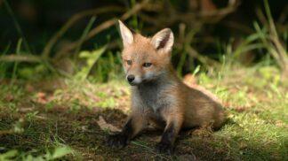 10 faktů o zvířatech. Tomu neuvěříte