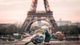 Thumbnail # Do Paříže za neopakovatelnou atmosférou. Město zamilovaných vás pohltí