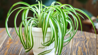 Tyhle pokojové rostliny vám vyčistí vzduch, říká studie vědců z NASA
