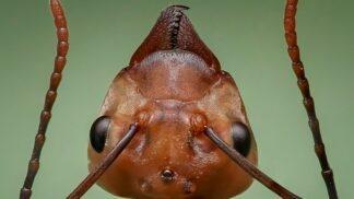 Okupují mravenci vaši domácnost? Víme, jak tuto válku vyhrát # Thumbnail