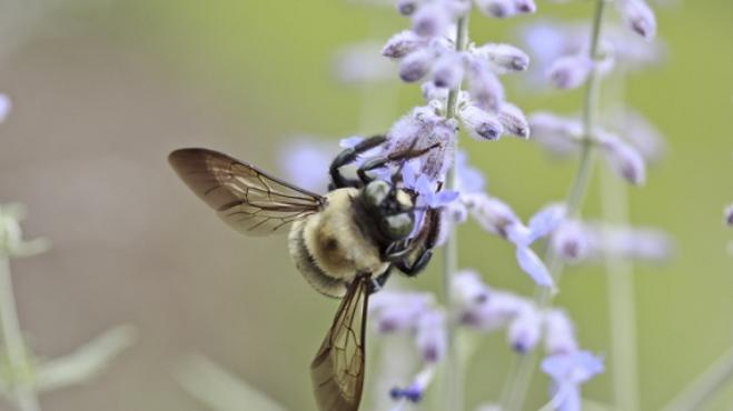 Thumbnail # Imunitní systém tělo brání. Alergii ale nepřemůže. Jak proti ní bojovat?