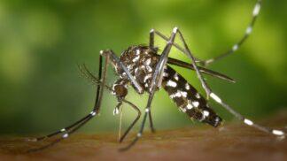 Sezóna otravných komárů začala. Jak se jim bránit v pěti bodech