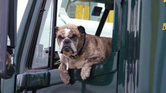 Dítě nebo zapomenutý pes v horkém autě nemají šanci přežít. Podle statistik dochází k těmto tragédiím rok co rok