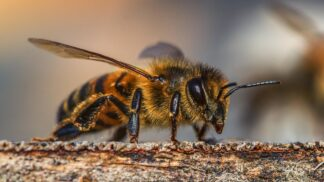 Japonští vědci vymýšlejí drony, které mají v budoucnu nahradit včely. Populace včel totiž nebezpečně klesá