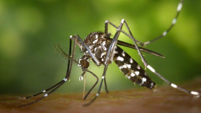 Všimli jste si, že na vás jdou komáři mnohem více než na ostatní? Možná patříte do těchto skupin lidí