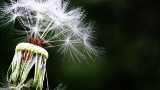 Víte, jak bojovat s alergií? Poradíme vám přírodní cestu. A bez chemie
