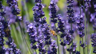 Jak se zbavit nechtěných škůdců na zahradě i doma přírodní cestou?
