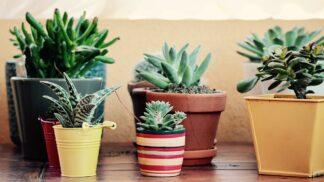 10 nenáročných pokojových rostlin, o které se zvládne starat úplně každý