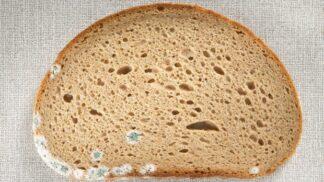 Tvrdý chléb či plesnivá slanina? V pohodě je snězte, říkají šéfkuchaři. Přečtěte si, jak nakládají s prošlými potravinami