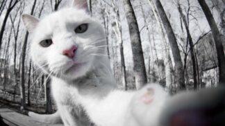 6 dokonalých selfíček koček, které vám vykouzlí úsměv na tváři