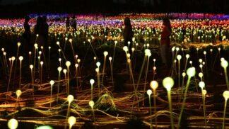 Pod magickou skálou Uluru se rozzářilo 50 000 květin. Žhnoucí přikrývka má připomínat dobré věci na tomto světě