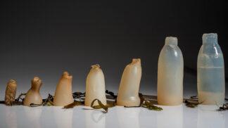 Student z Islandu představil rozložitelnou pitnou lahev, kterou můžete klidně sníst