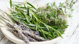 Dejte bylinkám zelenou: Jak o ně pečovat, aby přinesly do kuchyně jaro?