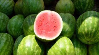Věděli jste, že musíte omýt meloun hned poté, co ho přinesete domů? Prozradíme vám, proč je to nezbytné # Thumbnail