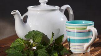 Připravte si domácí kopřivový čaj. Mladé kopřivy nepálí, ale prospívají tělu
