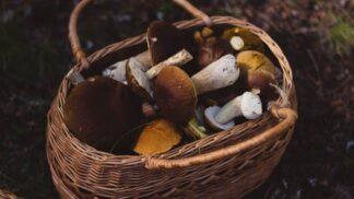 Houbové škvarky i pasta – tradiční způsoby, jak také zpracovat houby
